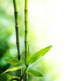 Two bamboo stalks and light beam Royalty Free Stock Photos