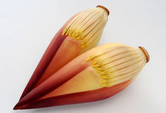Two Banana Flower Royalty Free Stock Images