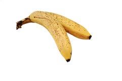 Two bananas. Royalty Free Stock Photos