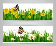 Two banners with butterflies and flowers. Royalty Free Stock Image
