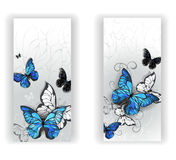 Two banners with butterflies morpho Royalty Free Stock Image
