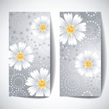 Two banners with daisy flowers on white background. Stock Photos