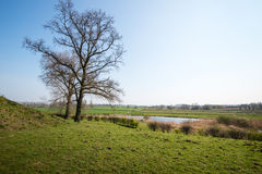 Two bare trees against a blue sky Stock Images