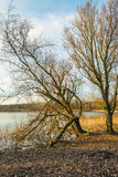 Two bare trees on the banks of a mirror smooth lake Stock Photography