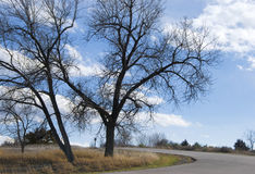 Two Bare Trees by an Empty Road. Peaceful scene on the Nebraska prairie of two bare trees by a small empty road Royalty Free Stock Image
