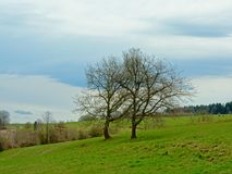 Two bare trees in a meadow in a cloudy Ardennes landscape. Two bare deciduous trees in a meadow in an Ardennes landscape under a cloudy sky in Liege, Belgium Royalty Free Stock Photography