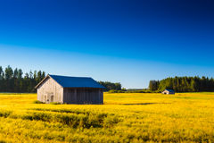 Two Barns On The Autumn Fields royalty free stock photo