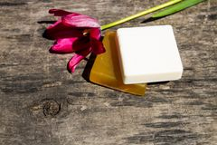 Two bars of natural soap and red tulip flower on rustic wooden background Stock Photo