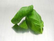 Two basil leaves Stock Image