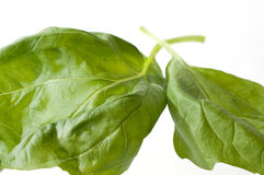 Two Basil Leaves Stock Photo
