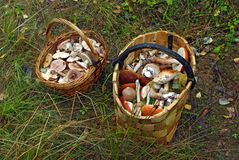 Two baskets of different mushrooms. Two baskets full of different forest mushrooms Stock Photo