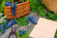 Two baskets with grapes and secateurs beside sheet of paper on rustic wood. Wine making background Stock Image