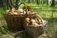 Two baskets of mushrooms Stock Photos