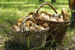 Two baskets of mushrooms Stock Photography