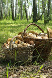 Two baskets of mushrooms Stock Image