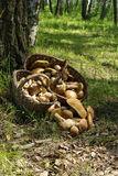 Two baskets of mushrooms Royalty Free Stock Photos