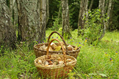 Two baskets of mushrooms Royalty Free Stock Photo