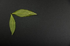 Two bay leaves on chalkboard Royalty Free Stock Photos