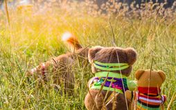 Two bear dolls in the sitting position at the garden ,look like they are watching the dog. stock photo