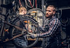Two bearded mechanics fixing bicycle`s wheel in a workshop. stock image