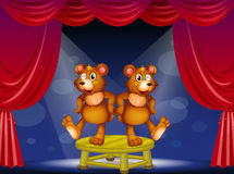 Two bears above the table performing at the stage Royalty Free Stock Photos