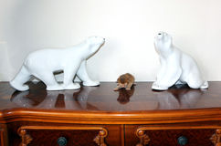 Two Bears and Abyssinian kitten. Two Bears and Abyssinian cat Royalty Free Stock Photo
