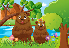 Two bears in the forest Stock Image
