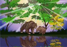 Free Two Bears Near Forest Lake Royalty Free Stock Image - 20231366