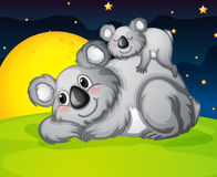 Two bears resting. Illustration of two bears resting in the night Stock Images