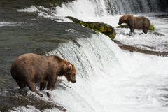 Two bears salmon fishing at Brooks Falls Stock Photos