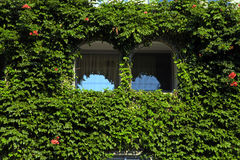 Two beautiful arch windows with green ivy wall, Greece Stock Photo