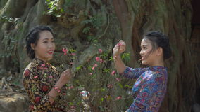 Two beautiful Asian girls. In national clothes. The girls are holding a twig of cherry blossoms and smiling stock video footage