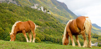 Two beautiful brown horses at the base of the mountain Royalty Free Stock Photography