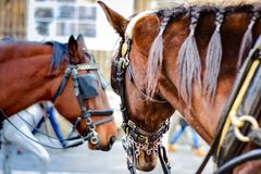 Brown horses in Seville, Spain. Two beautiful brown horses staying in center of Seville, Spain Royalty Free Stock Images