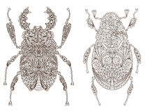 Two beautiful bugs Stock Images