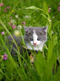 Two beautiful cats hiding in the grass Stock Images