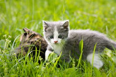 Two beautiful cats hiding in the grass Stock Photography