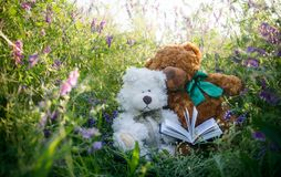 Couple of cute teddy bears in love on a sunny summer meadow stock images