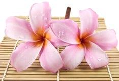 Two beautiful frangipani flower Stock Image