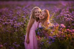 Two beautiful girls with long hair in a blooming field royalty free stock photography