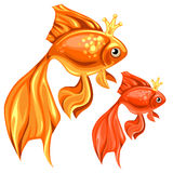 Two beautiful goldfish with magic crowns. Vector isolated Stock Image