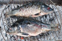 Two beautiful grilled European carps on barbecue Royalty Free Stock Image