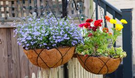 Hanging Flower Pots Are Colorful stock image