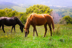 Two beautiful horses in the field stock photos