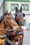 Two beautiful horses on the house background. Weimar, Germany. Two beautiful brown horses on the house background. Weimar, Germany Royalty Free Stock Images