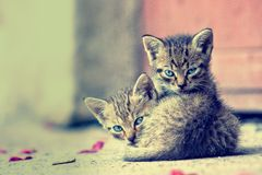 Two young kittens stock images