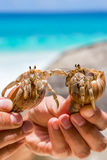 Two beautiful large hermit crab in hand Stock Photography