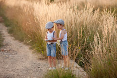 Two beautiful little children, boys, brothers in daisy field on Stock Images