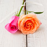 Two beautiful orange and pink roses Stock Photos