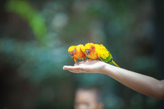 Two beautiful parrots Stock Images